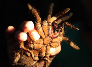 Super size me! The world's biggest spider and 8 other ...