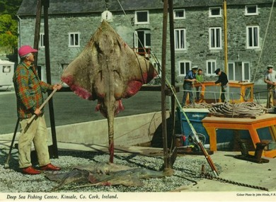 Fishermen in Kinsale, Co Cork, captured in a John Hinde postcard.