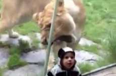 How not to… video your child at the zoo
