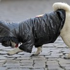 Well, this one probably likes its outfit as it is keeping it warm in Germany on a cold winter day last February. (AP Photo/Martin Meissner)