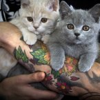 Kittens help productivity. Jury is still out on tattoos though. (AP Photo/Vadim Ghirda)