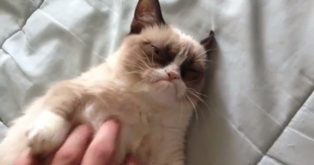 VIDEO: Is this the grumpiest cat in the world?