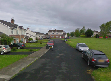 A dog was allegedly enticed to its death by students throwing a ball over and back across a road in College Court Drive, near the University of Limerick.