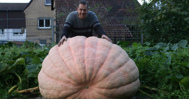 Giant Pumpkin Pic of the Day