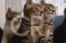 Baby and kittens are impressed by Ronaldo's skills