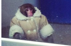 One year on, we remember the IKEA monkey